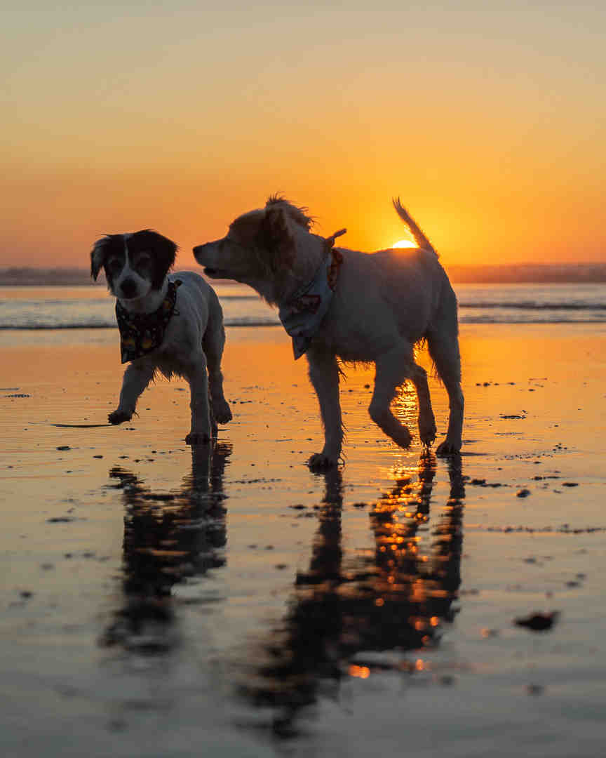 Are dogs allowed at Del Mar beach?